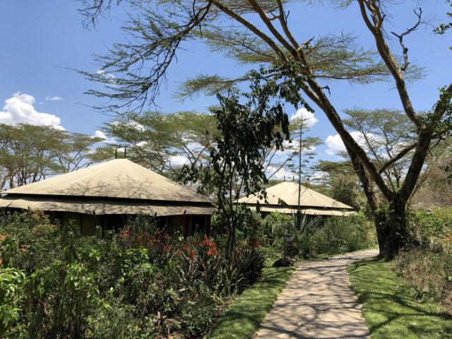 Luxury tents in Kenya